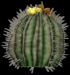 Barrel cactus plant
