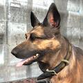 Dog collar worn.png