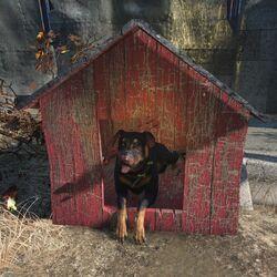 FO4-Junkyard dog-black