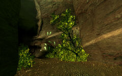 Fallen Rock Cave