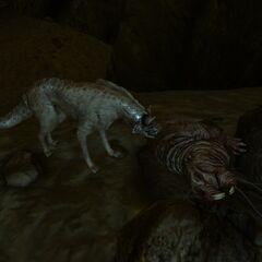 Дитинча кротокриса, вбитий молодим нічним мисливцем