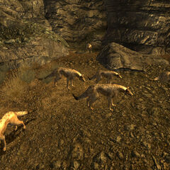 Нічні мисливці біля печери Морнінг-Стар