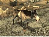 Dogmeat (Fallout 3)