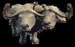 Brahmiluff2-NukaWorld