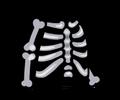 FoS skeleton costume.png