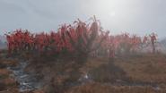 F76 Overgrown Sundew Grove
