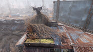 Fo76 Abandoned bog town (2)