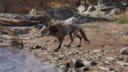 1200px-F76 Fox