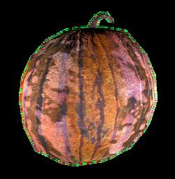 FO4 Melon Warwick