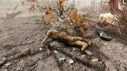 FO76 Lake Reynolds (corpse settler)