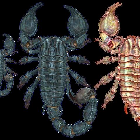 Порівняння розмірів. Зліва направо: 1 — фігура людини; 2 — радскорпіон; 3 — гігантський радскорпіон; 4 — радскорпіон-альбінос.