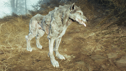 FO4FH Wolf4
