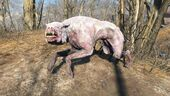 FO4 Albino mongrel