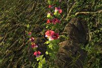 FNV Vault 22 entrance flowers 2