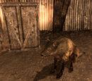 Lupa (Fallout: New Vegas)