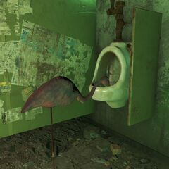 Flamingo drinking from a urinal