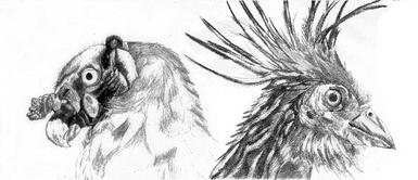 VulturPapa-Hoatzin