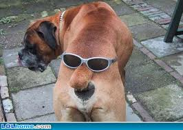 File:User Tezzla Dog.jpg