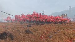 FO76 Veiled sundew grove