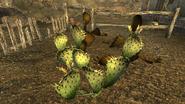 Fruta de cactus espinoso 2
