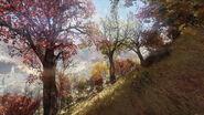 Nw ls landscape