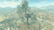 Casa del árbol de Chapita vista lejana