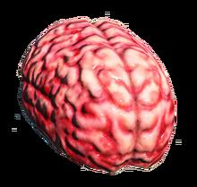 Fo4 brain