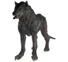 FO76 Feral Wolf