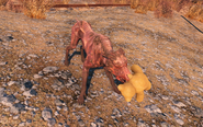 FO4 Dog playing with teddy