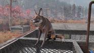 FO76 Fox2