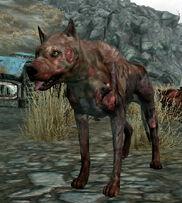 Vicious Dog alive