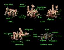 FO2 Centaur bio diagram