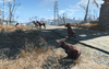 FO4 Pack of mongrels