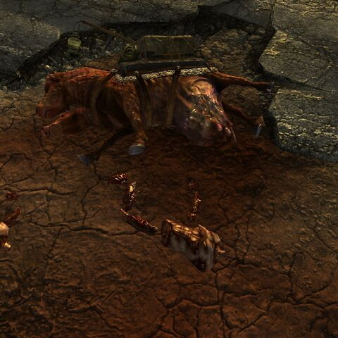 Close-up of the brahmin corpse