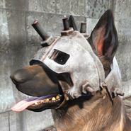 FO4 Собачья каска1