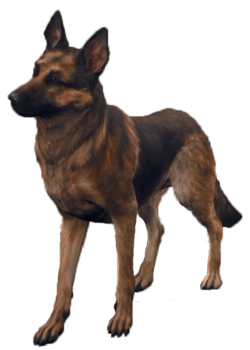 FO4 Dogmeat