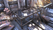 FO76 abandoned bog town (Mycology notes)