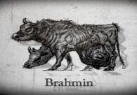 Szkic brahmina