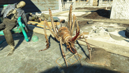 FO4NW Cave cricket 2