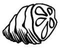 Icon ant meat.png