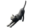 FO4 House Cat