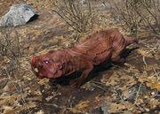 Fo4 rabid mole rat