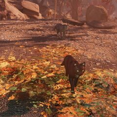 Three cats follow a veterinarian Gutsy through the woods in <i>Fallout 76</i>