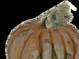 Gourd (Fallout 76)