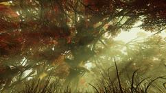 FO76 Treetops