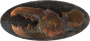 FO4-Mounted-Mirelurk-Claw