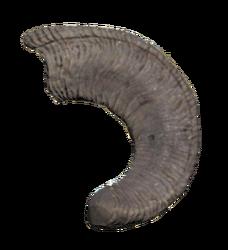 FO76WA Large sheepsquatch horn