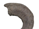 Large sheepsquatch horn