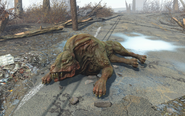 FO4 Hound paws injury