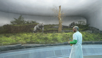Fo4 Gorillas Institute